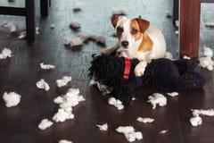 Choyer des chiens Photo libre de droits
