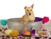 Choyer le temps au salon de chien photo stock