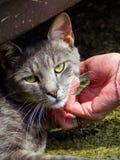 Choyer un beau chat égaré image libre de droits