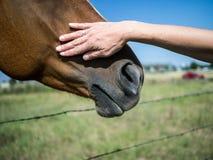 Choyer un cheval Image libre de droits