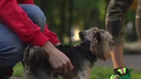 Choyer un chien sur une laisse banque de vidéos