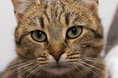 Choyez le chat Photographie stock