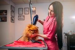Choyez le groomer avec le sèche-cheveux, chien dans le salon de toilettage Image stock