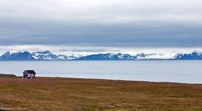 Choza abandonada en Svalbard Imagen de archivo