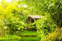 Choza amazónica del bosque Foto de archivo libre de regalías