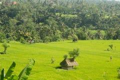 Choza cubierta con paja entre cosechas de la granja Imagen de archivo