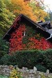 Choza cubierta en hojas en pueblo Foto de archivo libre de regalías