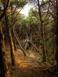 Choza de madera, choza del bosque hecha por los niños Fotografía de archivo libre de regalías