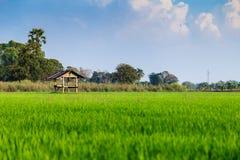 Choza del granjero en campo del arroz Imagenes de archivo