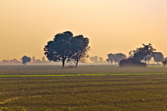 Choza del granjero en niebla de la mañana Fotografía de archivo libre de regalías