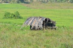 Choza en campo de arroz fotografía de archivo