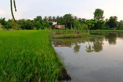 choza en campo del arroz en la puesta del sol Tailandia Asia Fotografía de archivo libre de regalías