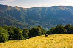 Choza en la colina herbosa cerca del bosque de la haya imagen de archivo
