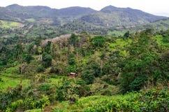 Choza en la selva verde en la montaña, Asia Imagen de archivo libre de regalías