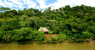 Choza en selva tropical Fotos de archivo libres de regalías