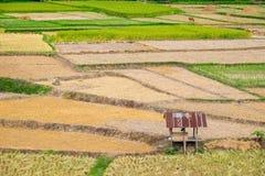 Choza entre campo del arroz Fotos de archivo libres de regalías