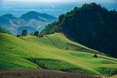 Choza entre granja del maíz en NaN Imagen de archivo libre de regalías