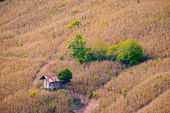 Choza entre granja del maíz en NaN Imagen de archivo
