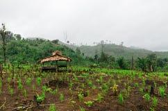 Choza tailandesa del granjero en campo del arroz Fotos de archivo libres de regalías