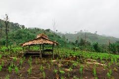 Choza tailandesa del granjero en campo del arroz Fotografía de archivo