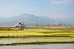 Choza vieja en una granja del arroz Fotos de archivo libres de regalías