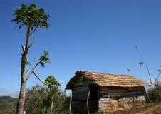 Choza y árbol Foto de archivo libre de regalías