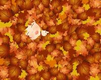 Chéri d'automne Image stock