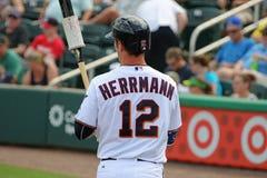 Chris Herrmann dos Minnesota Twins Imagem de Stock Royalty Free