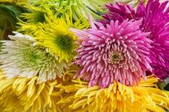 Chrisantemum floresce o ramalhete Imagem de Stock