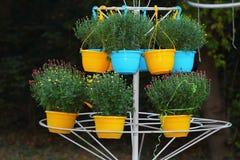 Chrisanthemums voor verkoop Royalty-vrije Stock Foto