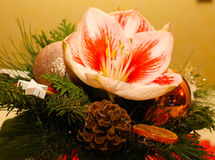 Chrismas Flowers Royalty Free Stock Photography