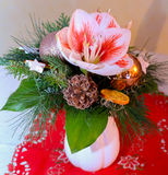 Chrismas Flowers Royalty Free Stock Photos