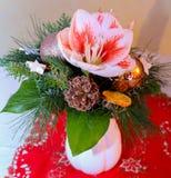 Chrismas kwiaty Zdjęcia Royalty Free