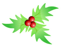 Chrismas leaves Stock Image