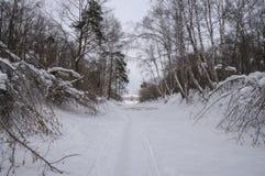 Chrismas snö Arkivfoton