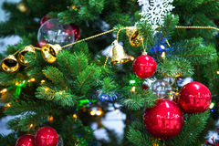 Chrismas tree and red ball. Royalty Free Stock Photo
