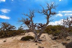 Chrissi Chrysi island landscape royalty free stock image