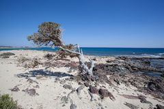 Chrissieiland in Kreta stock foto