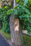 Christ's face carved on the trunk of a broken linden tree Royalty Free Stock Photos
