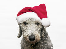 Christams Hund Lizenzfreies Stockbild
