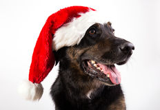 Christams hund Arkivbild