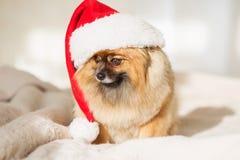 Christams Hund guten Rutsch ins Neue Jahr-Karte 2018 mit dem Jahrhundesymbol Stockfotografie