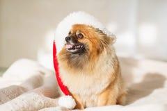 Christams Hund guten Rutsch ins Neue Jahr-Karte 2018 mit dem Jahrhundesymbol Lizenzfreies Stockfoto