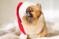 Christams Hund guten Rutsch ins Neue Jahr-Karte 2018 mit dem Jahrhundesymbol Stockbild