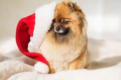 Christams Hund guten Rutsch ins Neue Jahr-Karte 2018 mit dem Jahrhundesymbol Lizenzfreie Stockfotos