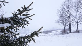 Christas tree cover with snow. Picture of christmas tree cover with snow Royalty Free Stock Photo