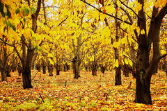 Christchurch in Autumn Royalty Free Stock Photos
