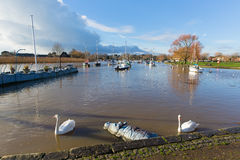 Christchurch Dorset England UK with swans on river. River Stour Christchurch Dorset England UK with swans swimming and blue sky Stock Photo