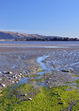 Christchurch Estuary & Bird Sanctuary Panorama Royalty Free Stock Photos