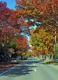 Christchurch, Memorial Avenue in Autumn Colours, New Zealand stock photo
